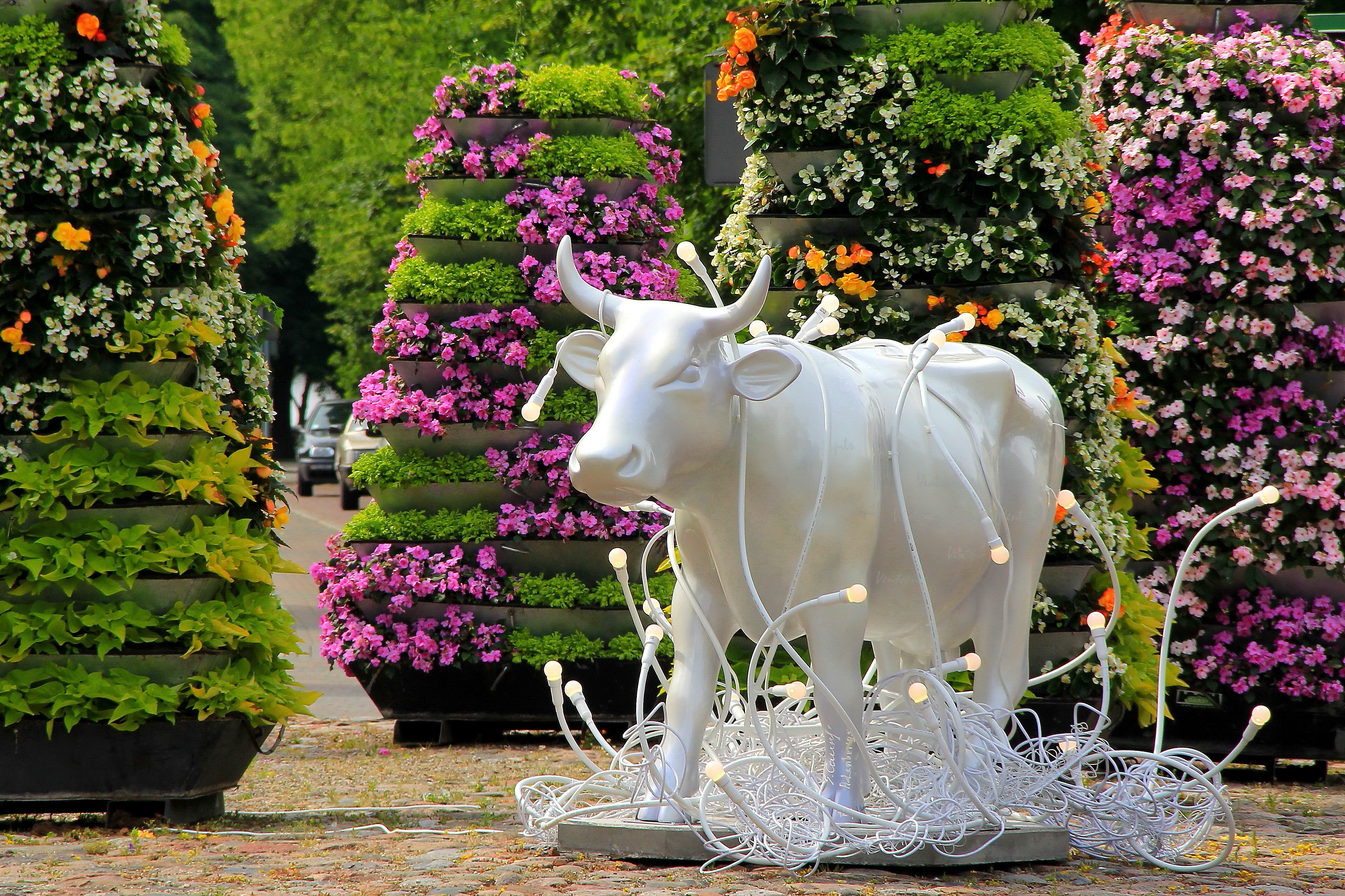 Cow parade, Ventspils, apmeklē Ventspili, ekskursija