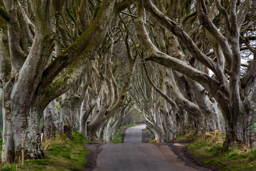 meļīrija, Troņu spēles, Karaļu ceļš, Northirealand, Belfāsta, Belfast, ceļo ar prāmi,