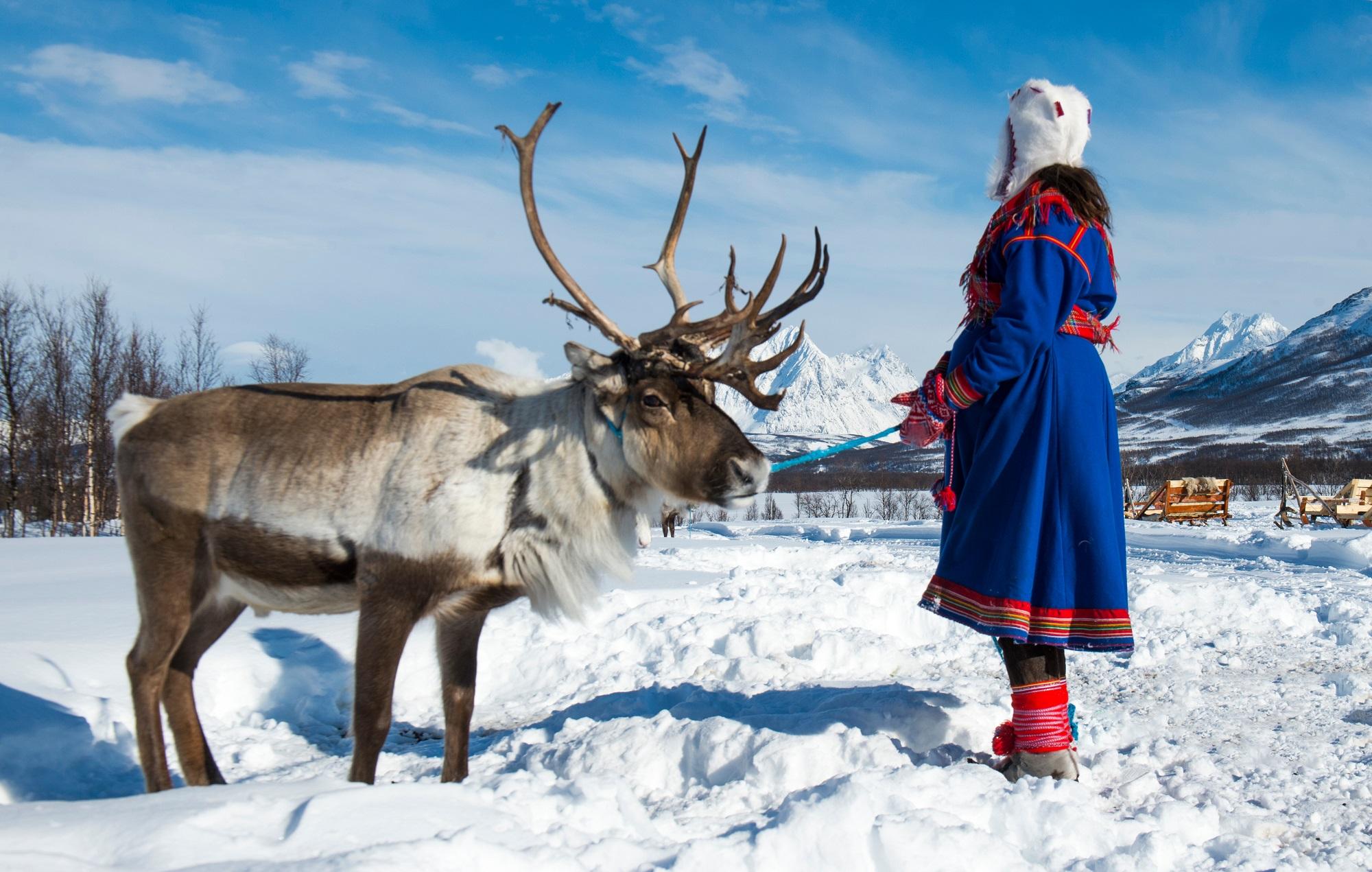 Sāmi, Lapzeme, Zviedrija, ziemeļbrieži, sāmu tauta, sāmi zviedrijā,