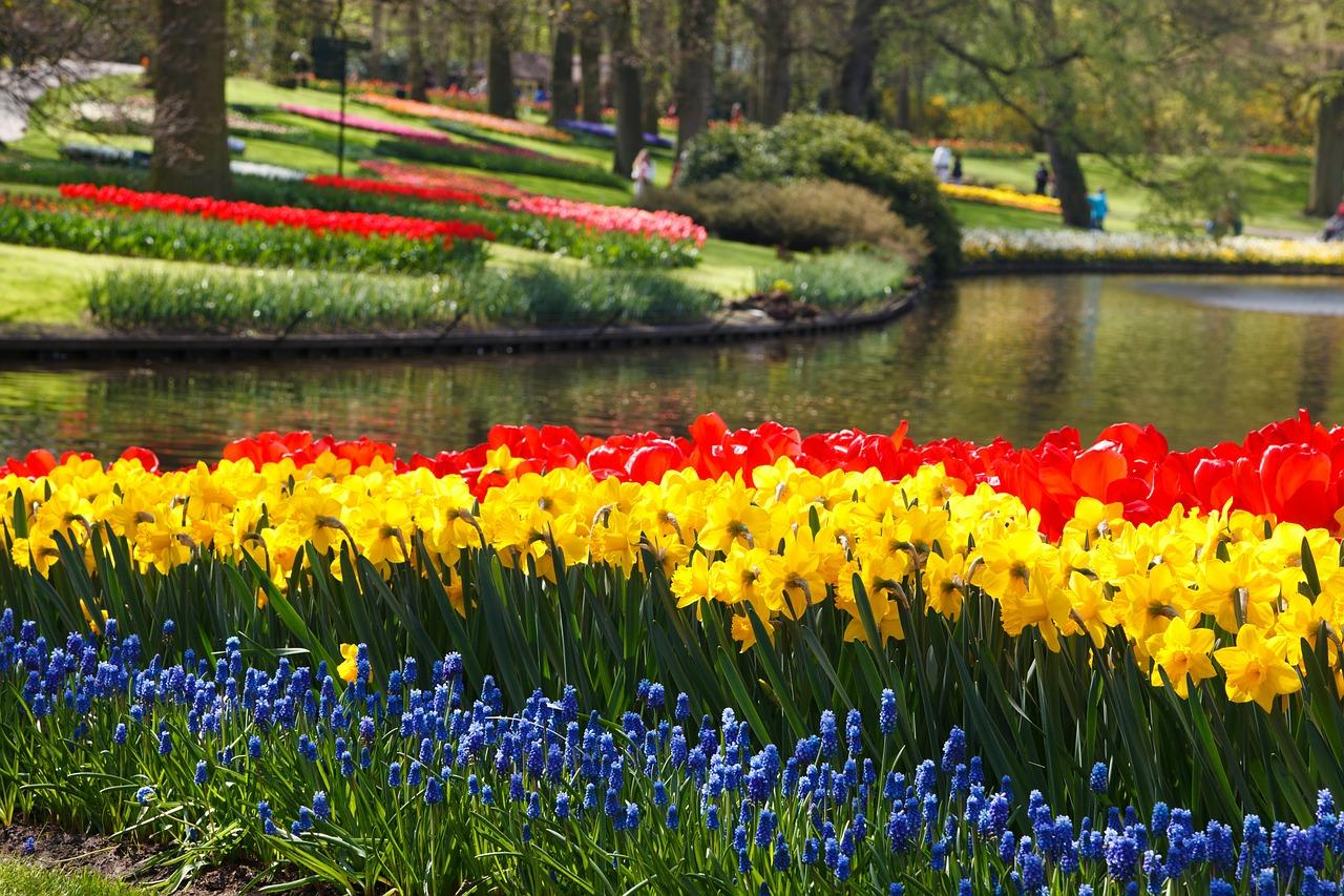 Krāsainas tulpes, Nīderlandes tulpju dārzs
